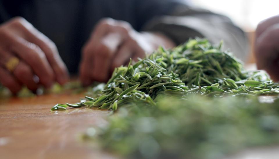 采摘好的茶叶要经过人工细心的分拣哟