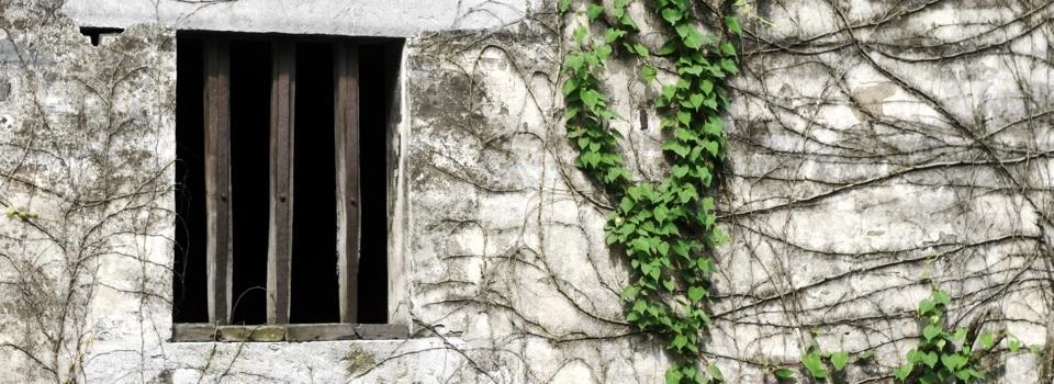 窗户上的一抹绿色-宁静的美好-米多饭香工作室
