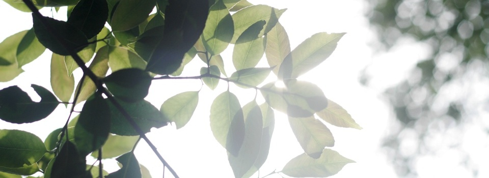 阳光下的绿叶-宁静的美好-米多饭香工作室