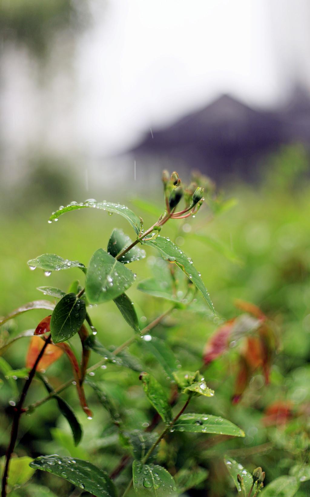 雨 - 002 - 摄影:米多饭香