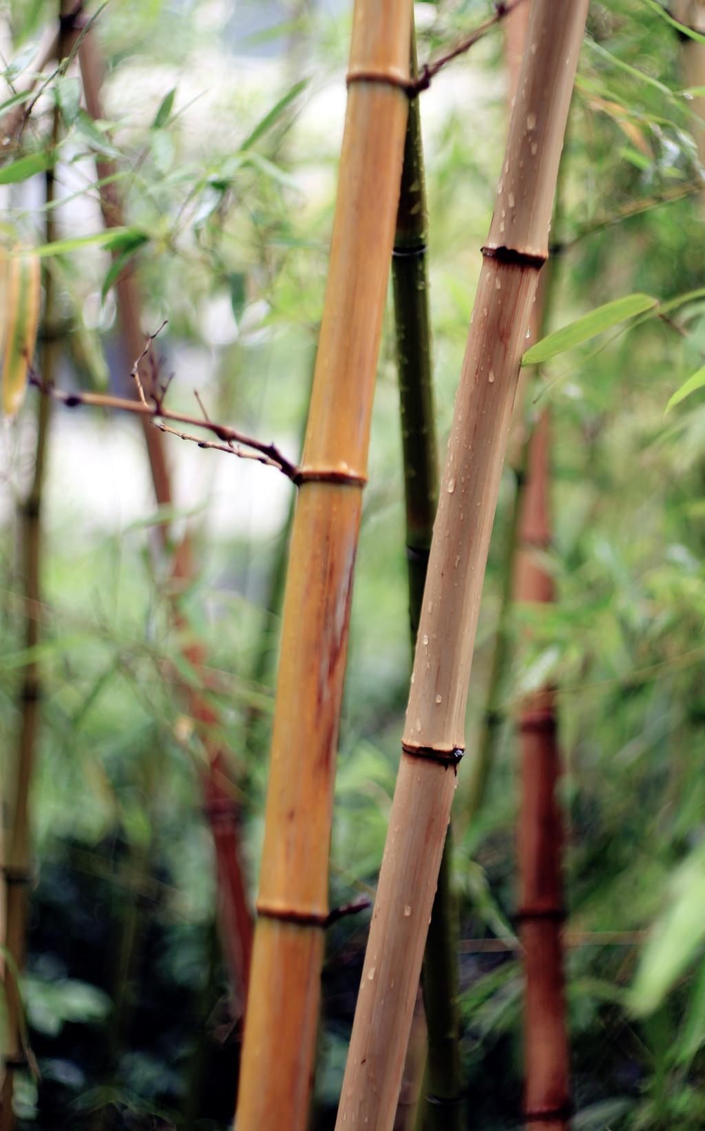 雨 - 005 - 摄影:米多饭香