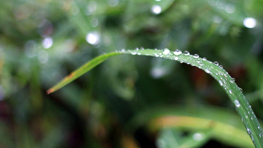 雨 - 006 - 摄影:米多饭香