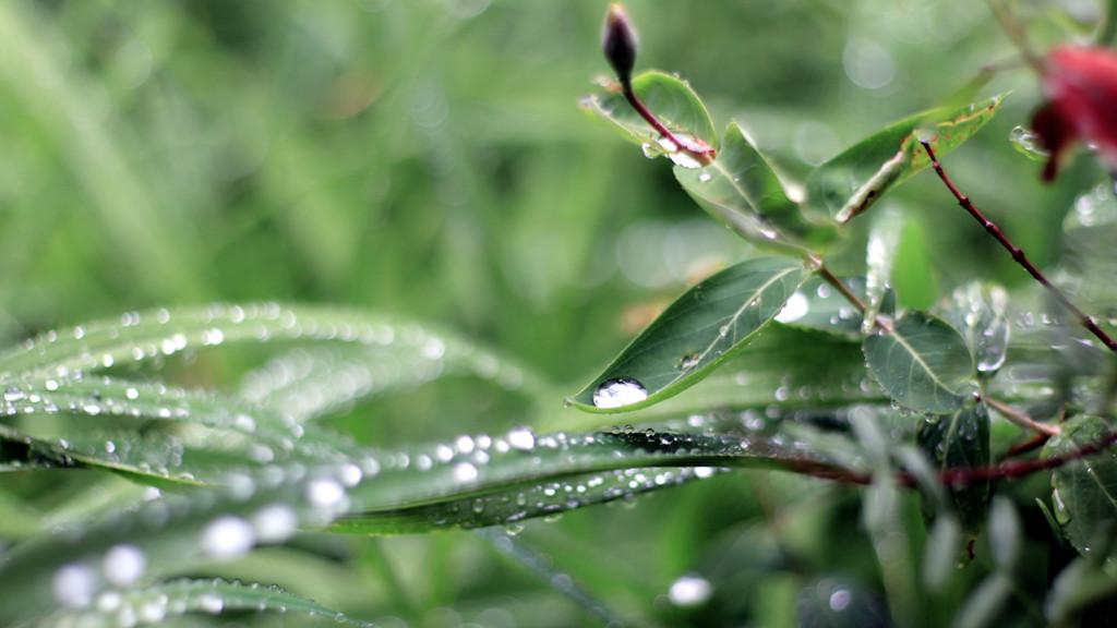 雨 - 007 - 摄影:米多饭香