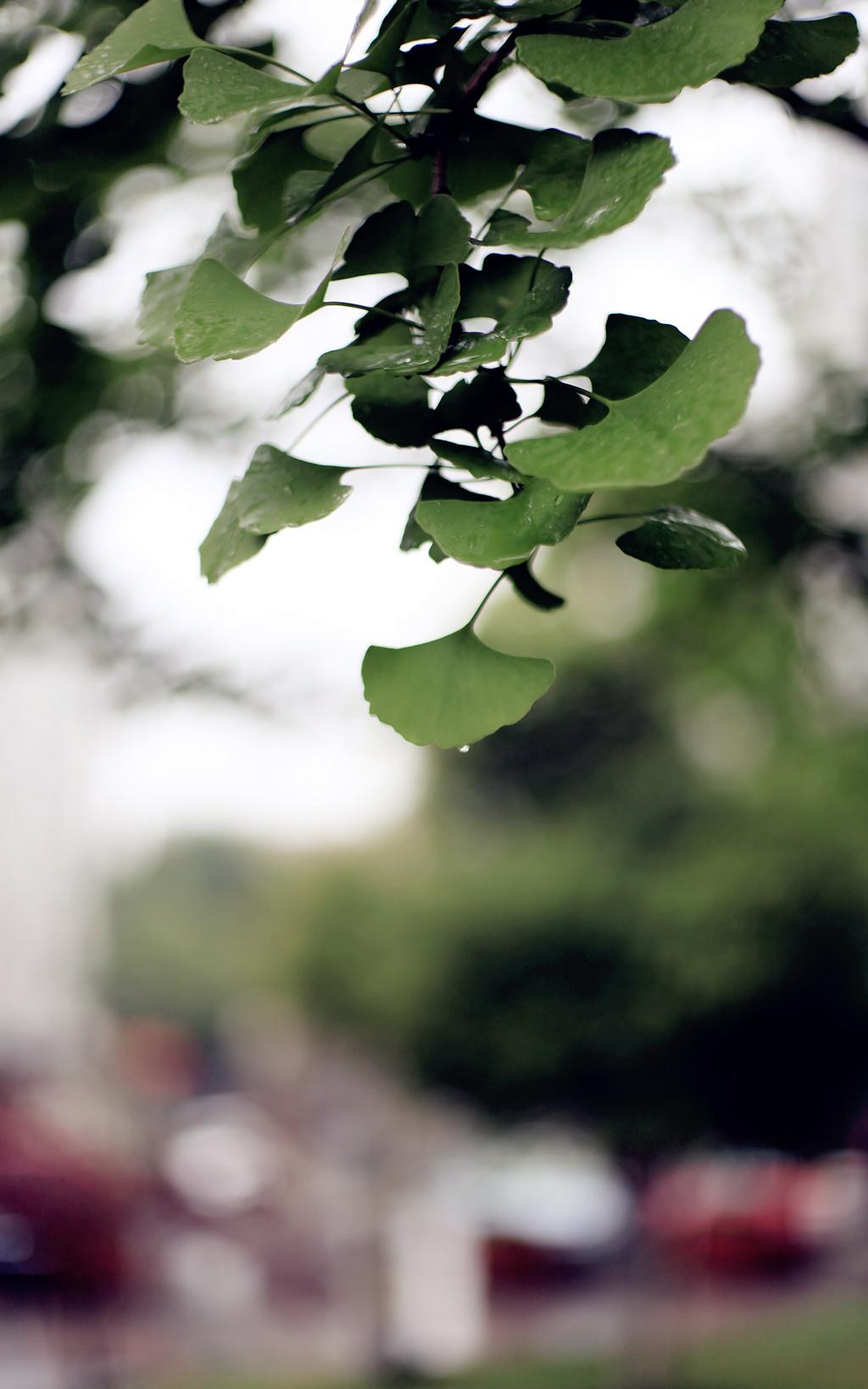 雨 - 010 - 摄影:米多饭香