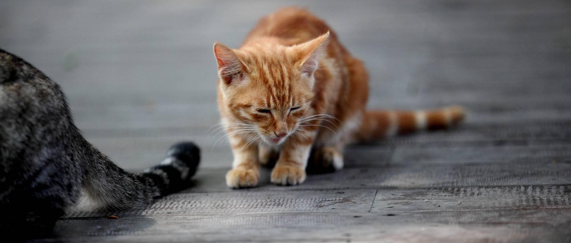 那些猫咪呀 ~ (米多饭香拍摄)