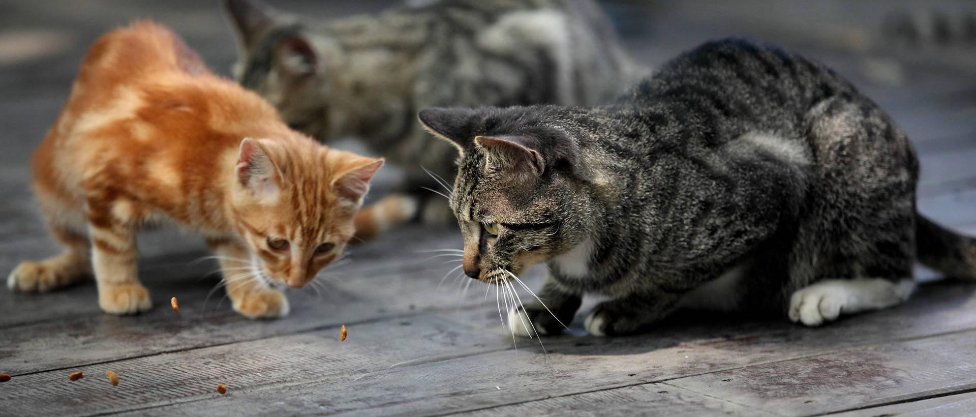 那些猫咪呀 ~(米多饭香拍摄)